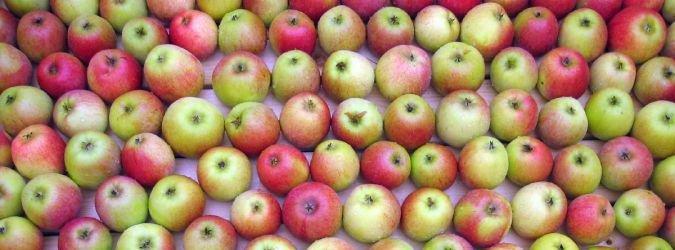 jabłko właściwości