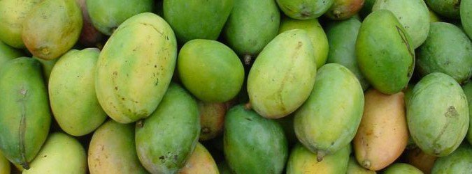 mango właściwości