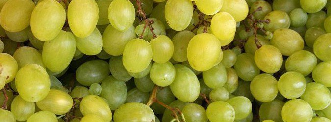winogrona właściwości